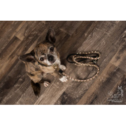 Not too pet - Halsband Leine Hundeshop Aarau